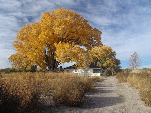 san-pedro-house-autumn-cottonwood