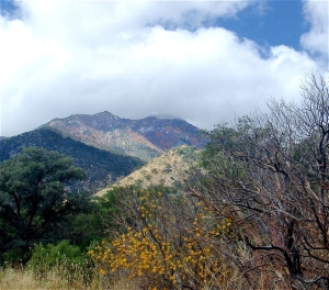 The Huachuca Mountains near Sierra Vista