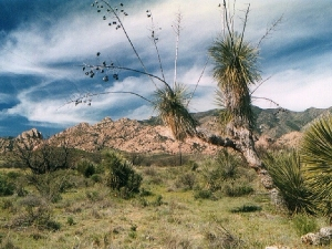Cochise Stronghold in the east side of the Dragoon Mountains
